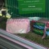 Разрубы баранины,выпускаемой мясоперерабатывающим заводом Томас Фуд